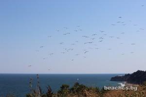 bqla-beach-3