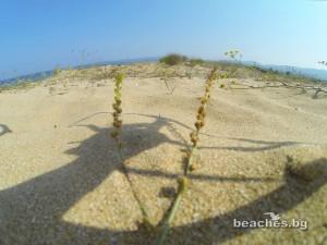 1-alepu-beach-9